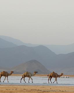 Thumb camellos